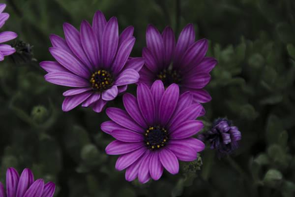 Photograph - Mystical Purple by Penny Lisowski