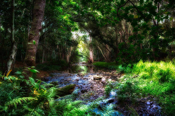 Photograph - Mystical Stream  by Robert FERD Frank