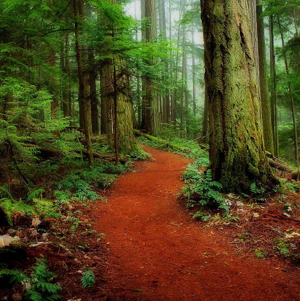 Mystical Trail Art Print