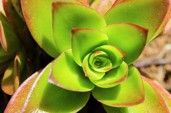 Hawaiian Flower Photograph - Na Aina Kai Botanical Gardens by Michael Defreitas