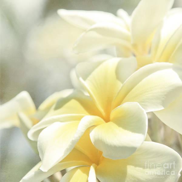 Hawaiian Flower Photograph - Na Lei Pua Melia Aloha E Ko Lele by Sharon Mau