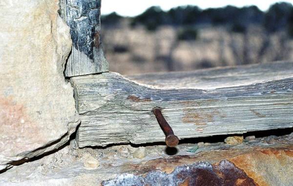 Photograph - Nail On The Trail by Susie Rieple