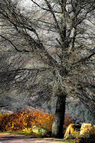 Photograph - Naked For The Winter by Edgar Laureano
