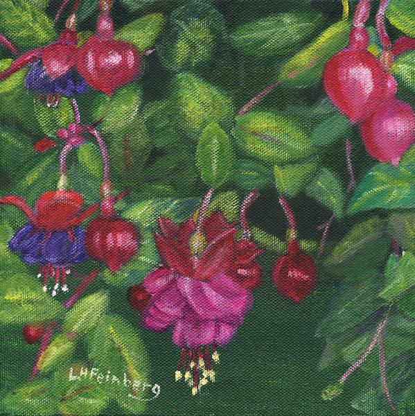 Painting - Nancy's Fuchsias by Linda Feinberg