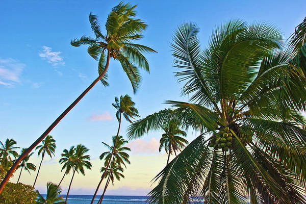 Seacoast Photograph - Nanuku Levu, Fiji Islands Palm Trees by Miva Stock