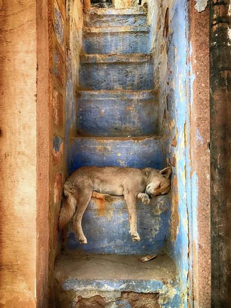 Tire Photograph - Nap Time by Roxana Labagnara
