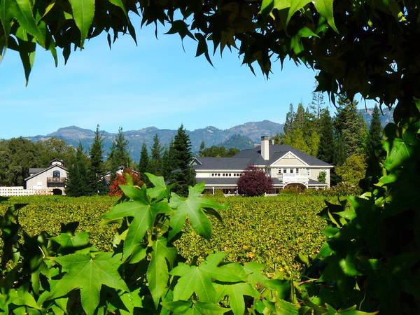 Photograph - Napa Valley Duckhorn Winery by Jeff Lowe
