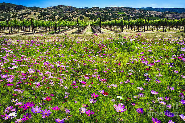 Wall Art - Photograph - Napa Valley Wildflowers And Grapevines by George Oze