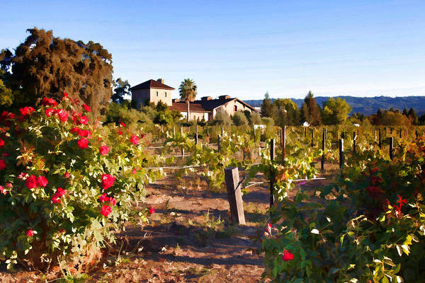 Mixed Media - Napa Vineyard In The Autumn by Cliff Wassmann