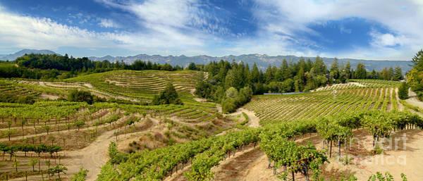 Wine Barrels Photograph - Spring Mountain Beauty by Jon Neidert