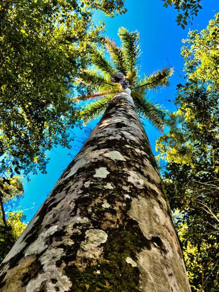 Photograph - Naples Palm Tree   by Lars Lentz