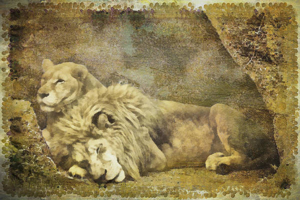 Photograph - Naptime In The Den by Trish Tritz