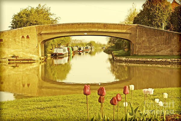 Dafodil Photograph - Napton Junction by Linsey Williams