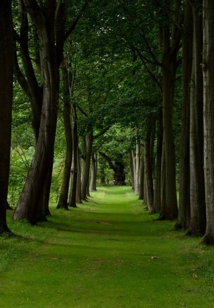 Photograph - Narrow Tree Path by Scott Lyons