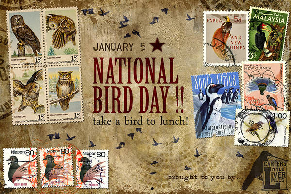 Correspondence Photograph - National Bird Day by Carol Leigh