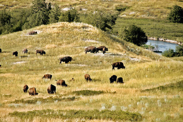 Photograph - National Bison Range Moiese Mt by Christine Till