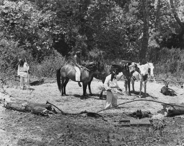 Photograph - Native Americans Threshing by Underwood Archives Onia
