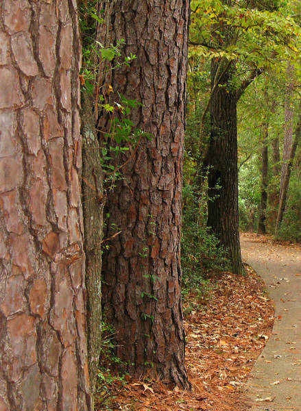 Wall Art - Photograph - Natural Beauty - The Woodlands by Connie Fox