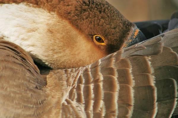 Water Birds Wall Art - Photograph - Natural Beauty by Valia Bradshaw