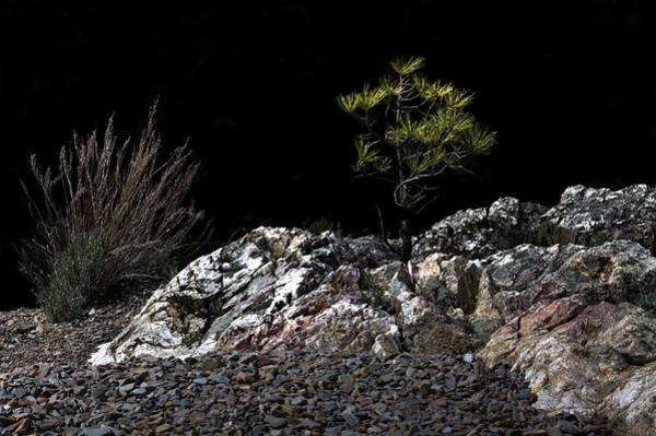 Photograph - Natural Bonsai 1 by Lee Santa