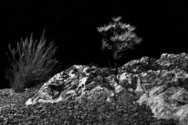 Photograph - Natural Bonsai 2 by Lee Santa