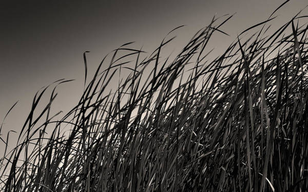 Photograph - Natural Compromise by Steven Milner