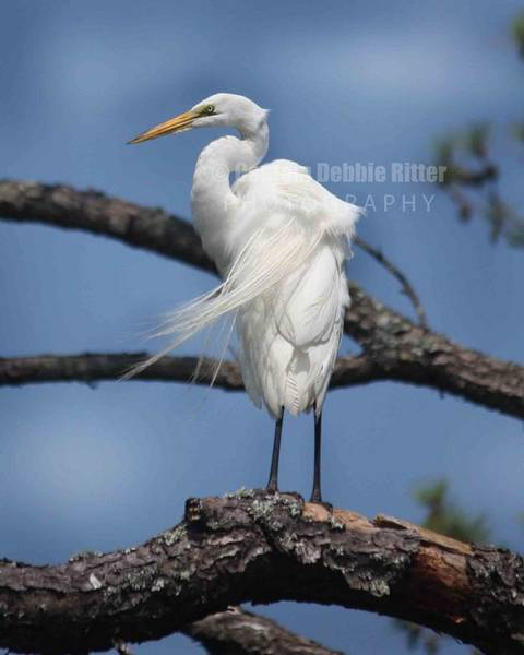 Encounter Bay Photograph - Natural Elegance by Captain Debbie Ritter