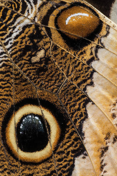 Butterflies Photograph - Natural Fabric by Ingridvekemans
