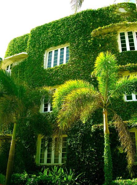 Photograph - Natural Ivy House by Monique Wegmueller
