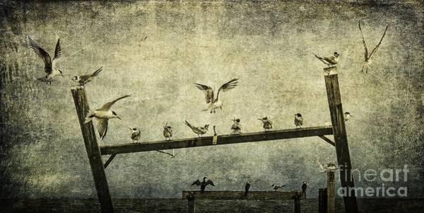 Wall Art - Photograph - Natural Order by Andrew Paranavitana
