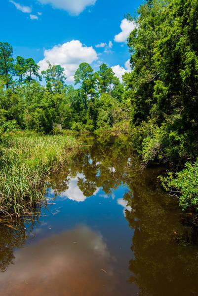 University Of West Florida Photograph - Natural Overgrowth by Jon Cody