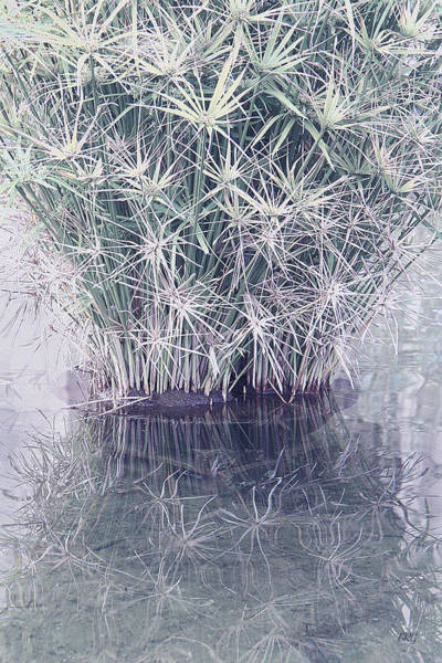 Wall Art - Photograph - Natural Reflections by Ben and Raisa Gertsberg