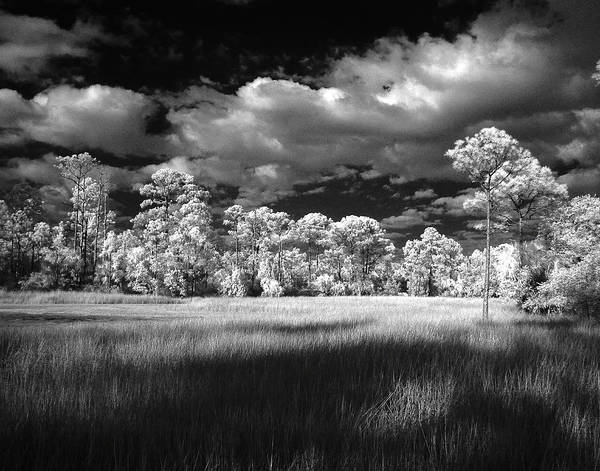 Sawgrass Digital Art - Natural Retreat by Gregory W Leary
