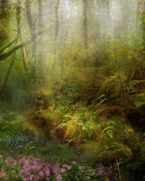 Ferns Digital Art - Natural State by Karen Koski