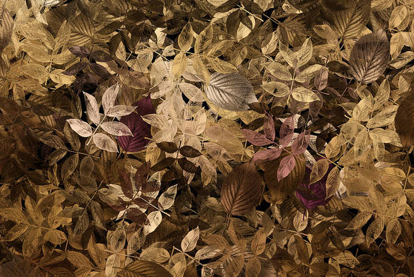 Gold Leaves Digital Art - Naturaleaves - Gla02f by Variance Collections
