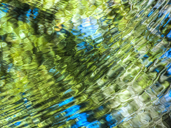 Photograph - Nature Abstract by Carolyn Marshall