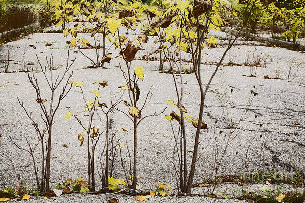 Photograph - Nature Defeats Cement by Jim West