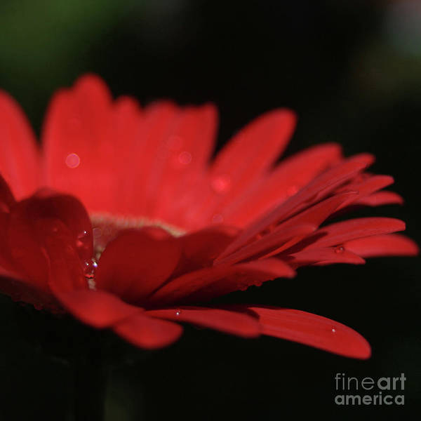 Photograph - Nature In Spirit by Sharon Mau