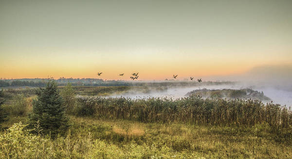 Photograph - Nature In The Morning by Nick Mares