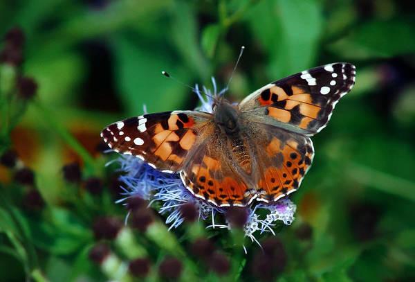 Photograph - Nature Is Beautiful by Elaine Malott