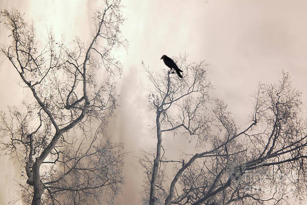 Ethereal Photograph - Nature Raven Crow Trees - Surreal Fantasy Gothic Nature Raven Crow In Trees Sepia Print Decor by Kathy Fornal