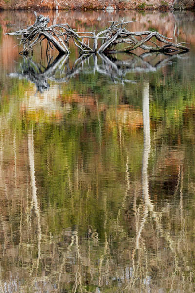 Photograph - Nature Made Portrait by Bill Wakeley