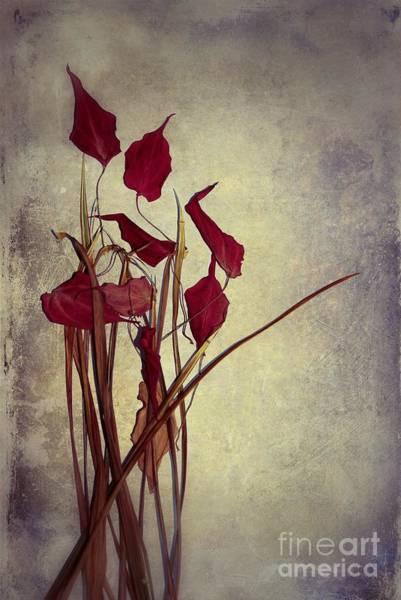 Aimelle Photograph - Nature Morte Du Moment  01 - Pr03 by Variance Collections