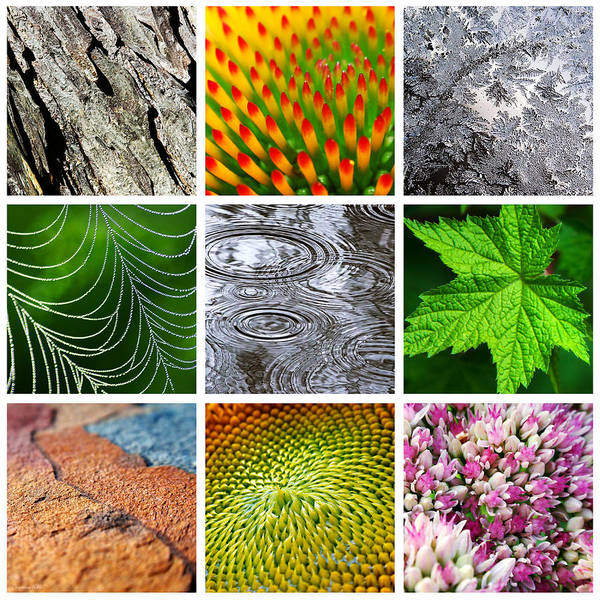 Spider Rock Photograph - Patterns In Nature by Christina Rollo