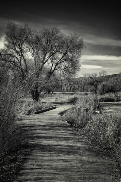 Photograph - Nature Preserve Trail by David Waldrop