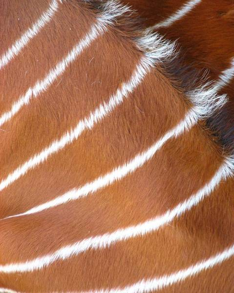 Photograph - Nature Stripes by Cleaster Cotton