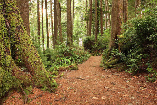 Vancouver Island Photograph - Nature Trail by Emilynorton