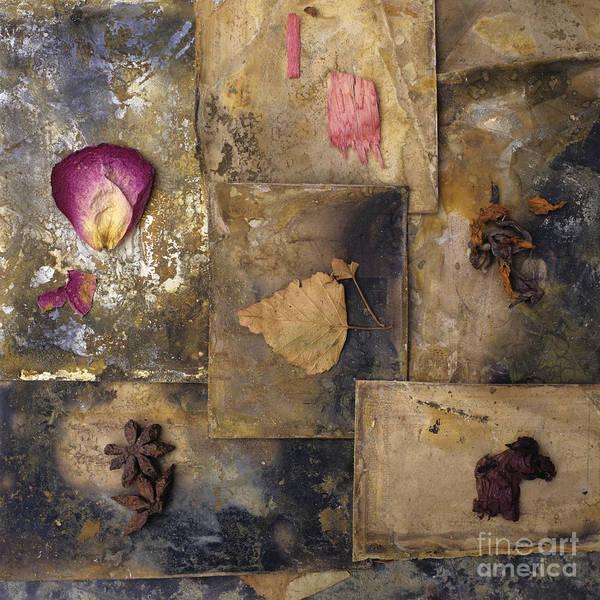 Work Of Art Photograph - Nature Variety by Bernard Jaubert