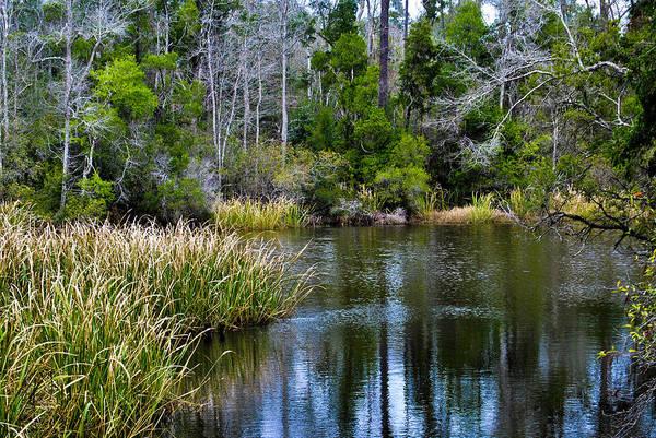 University Of West Florida Photograph - Nature Walk 1 by Jon Cody