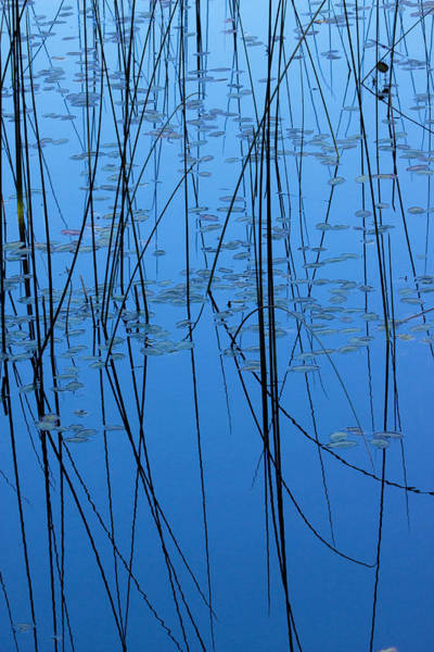 Photograph - Nature's Abstract In Blue 2 by Peggy Collins